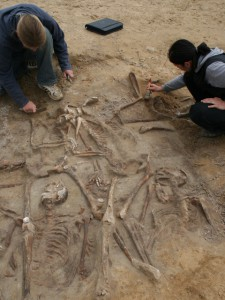 """Der Graubraune """"Körperschatten"""" um die Skelette der toten Söldner zeichnet sich im gelben Sand gut ab (Foto: A. Grothe, BLDAM)"""