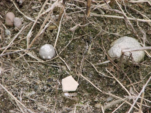 Bleikugel und Scherbe auf dem Acker (Foto: © BLDAM)